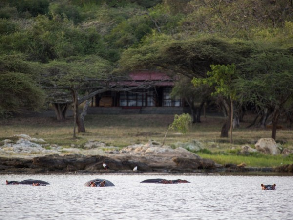 Hippo in front of the Lodge